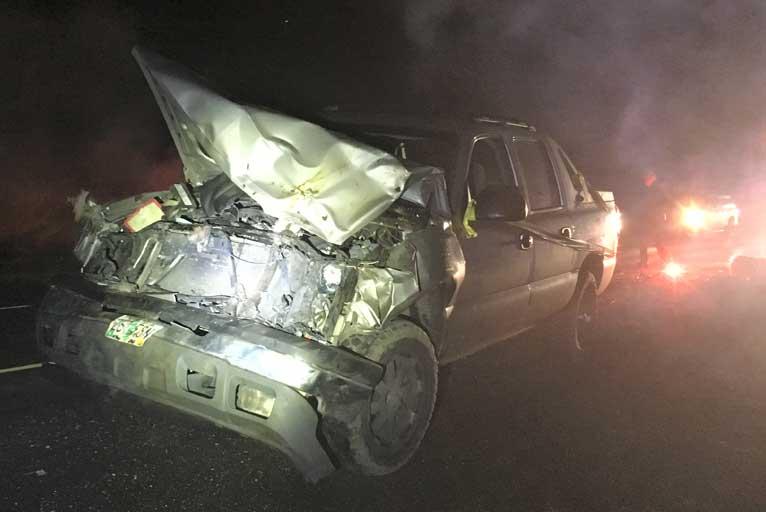 Vehicle Strikes 11 Elk - Wild Coast Compass